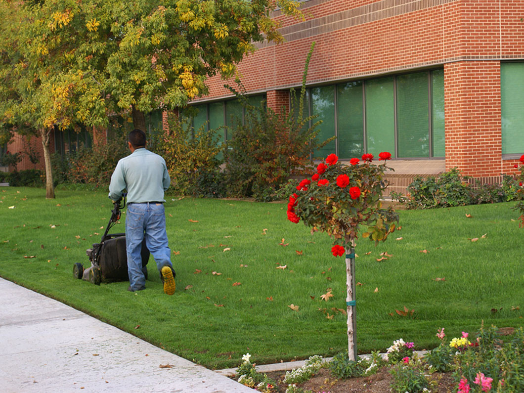 Take the Hassle Out of Maintaining a Great Lawn